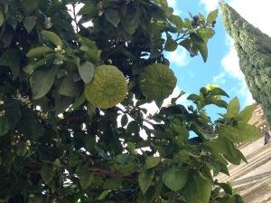 Was in aller Welt sind das nur für Früchte?