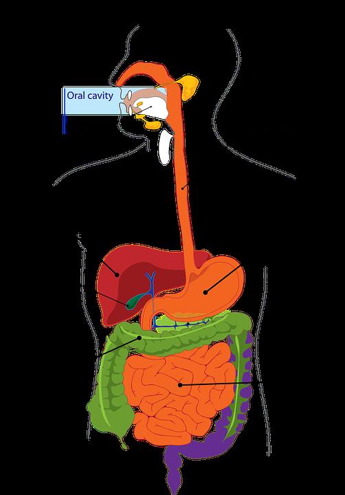 Magendrücken Völlegefühl übelkeit Verstopfung Wenn Der Diabetes