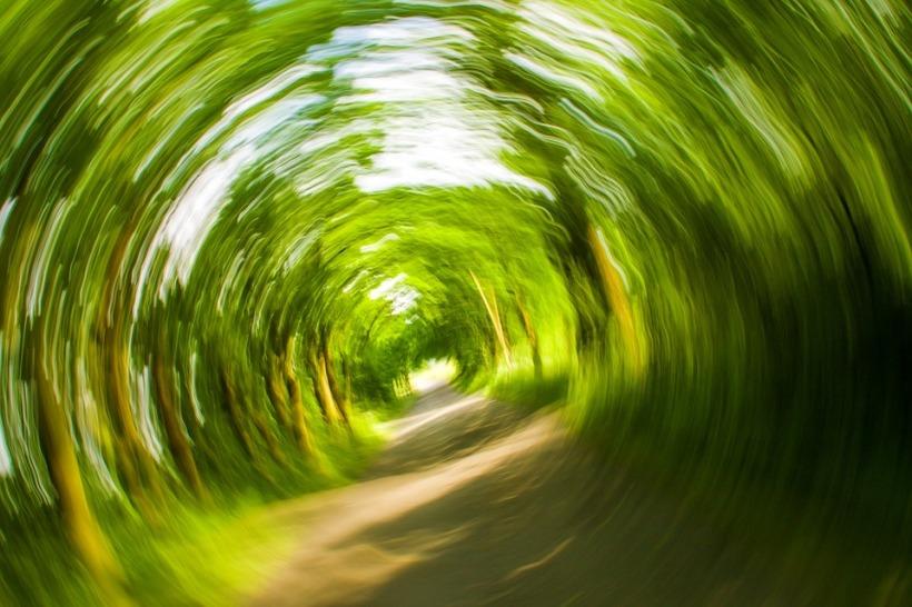 trees-358418_960_720.jpeg