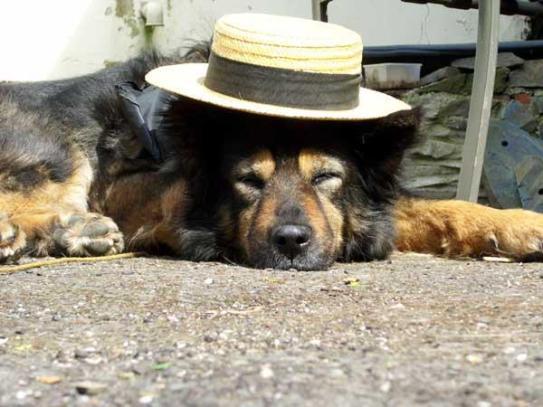 Ein relaxter Hund!