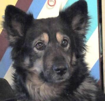 Mein tausendster Facebook-Fan: Zuckerhund Paula