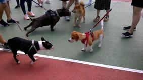 puppy-2361142_960_720